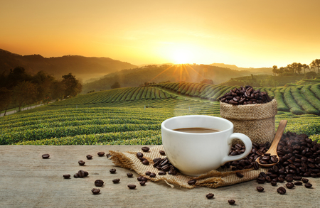 Foto de Hot Coffee cup with Coffee beans on the wooden table and the plantations background - Imagen libre de derechos