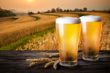 Photo pour Two glass of beer with wheat on wooden table. Glasses of light beer with barley and the plantations background. - image libre de droit