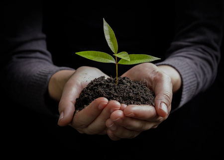 Foto de Two hands holding and caring a young green plant / planting tree / growing a tree / love nature / save the world - Imagen libre de derechos