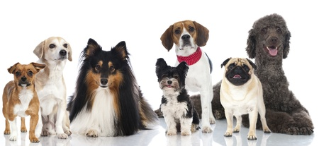 Group of pedigree and mixed breed dogs
