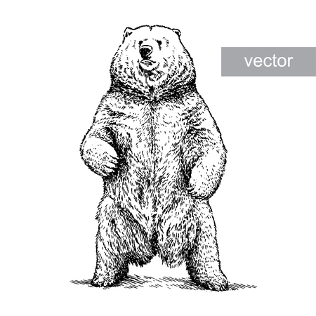 Ilustración de engrave isolated vector bear illustration sketch. linear art - Imagen libre de derechos