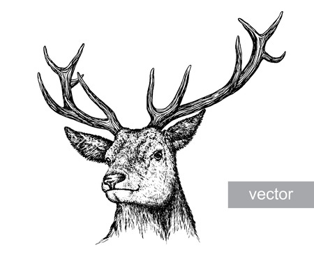 Ilustración de engrave isolated deer vector illustration sketch. linear art - Imagen libre de derechos