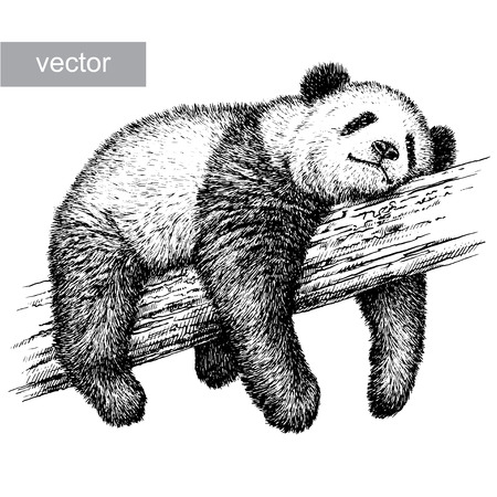 Photo pour engrave isolated panda bear vector illustration sketch. linear art - image libre de droit