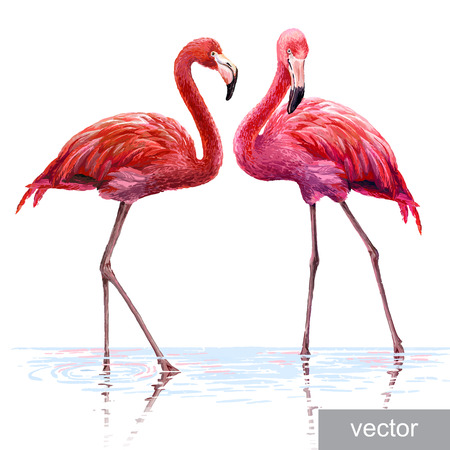 Ilustración de Colorful pink vector flamingo. Realistic illustration. Blue Lagoon - Imagen libre de derechos