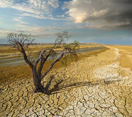 Photo pour withered dead tree in desert landscape background - image libre de droit