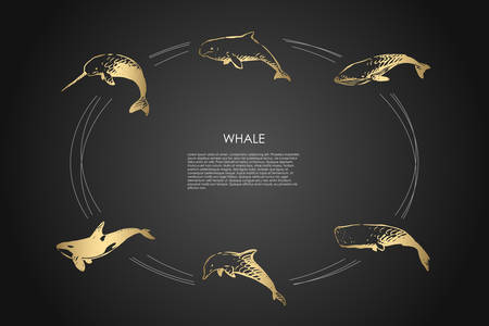 Whale - different types - dolphin, cachalot, sperm and killer whale vector concept set. Hand drawn sketch isolated illustration