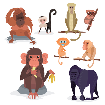 Illustration for Different breads monkey character animal wild zoo ape chimpanzee vector illustration. - Royalty Free Image