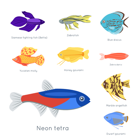 Illustration pour Exotic tropical fish different colors underwater ocean species aquatic nature flat isolated vector illustration. Decorative wildlife cartoon fauna aquarium water marine life. - image libre de droit