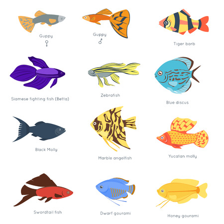 Illustration pour Exotic tropical fish different colors underwater ocean species aquatic nature flat isolated vector illustration - image libre de droit