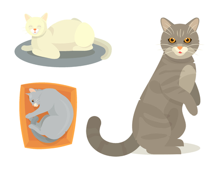 Illustrazione per Different cat vector set illustration - Immagini Royalty Free