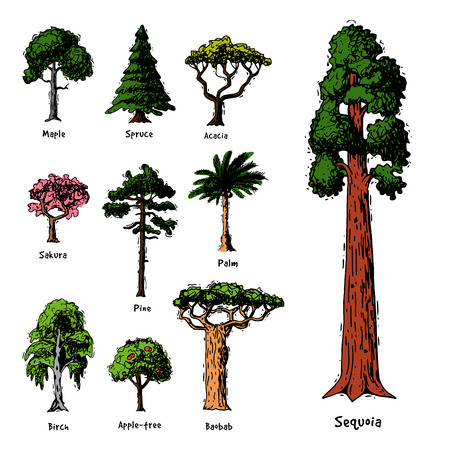 Illustration for Tree types vector green forest pine treetops collection of birch, cedar and acacia or realistic greenery garden with palm and sakura illustration isolated on white background - Royalty Free Image