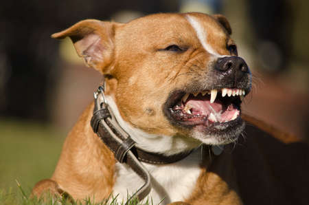 Photo for dog teeth - Royalty Free Image