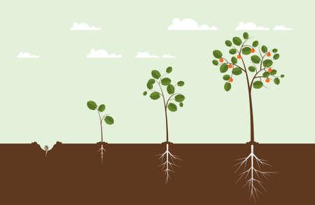 Illustration pour Growing Tree Illustration - image libre de droit