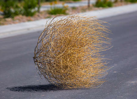 Photo for Tumbleweed n the center of a residential street - Royalty Free Image