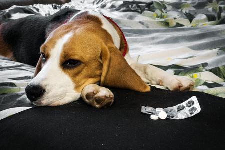 Photo pour Sick dog with pills - image libre de droit