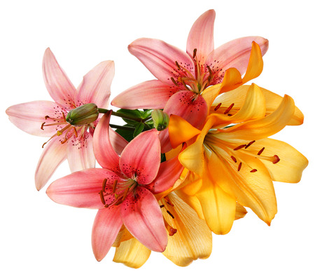 Photo for Flowers pattern. Pink and orange lilies isolated on white - Royalty Free Image