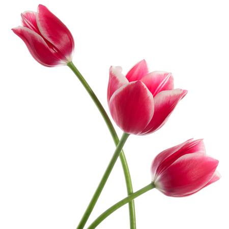 Foto de Three fine flowers isolated on white - Imagen libre de derechos