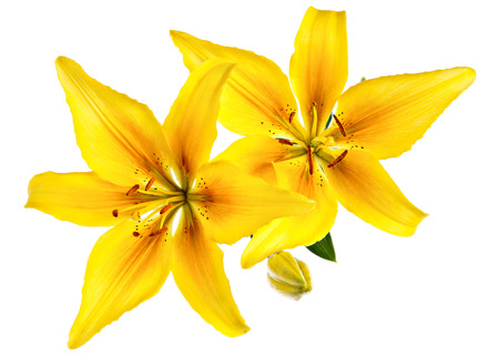 Photo pour Vintage flowers pattern with yellow lilies isolated on white - image libre de droit