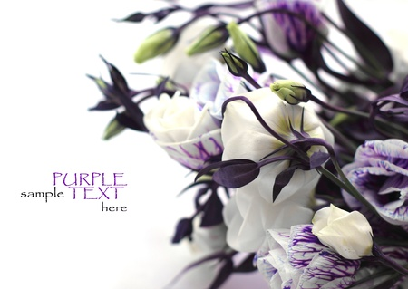 Photo for purple flowers on a white background - Royalty Free Image