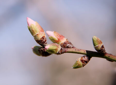 Blossoming buds on tree on bright