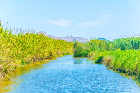 Photo for Marshes of Albufera national park at Mallorca, Spain - Royalty Free Image