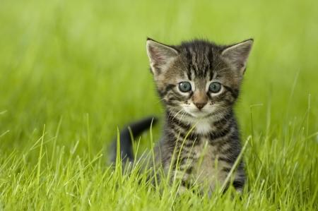 Photo pour little kitten playing on the grass close up - image libre de droit