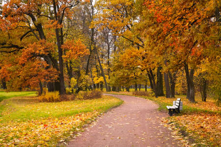 Photo for autumn in park - Royalty Free Image