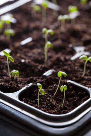 Foto de seedling plants growing in germination plastic tray - Imagen libre de derechos
