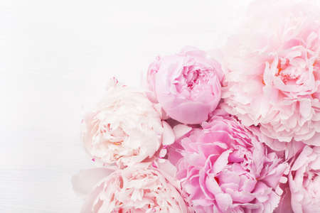 Foto de beautiful pink peony flower background - Imagen libre de derechos