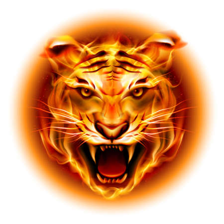 Illustration for Head of agressive fire tiger isolated on white background. - Royalty Free Image