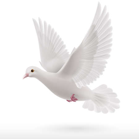 Illustration pour Flying white dove on white background as symbol of peace - image libre de droit
