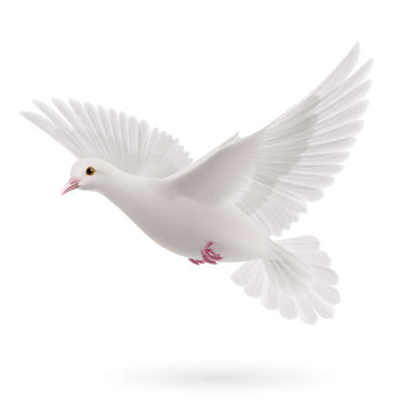 Illustration pour Realistic white dove on white background. Symbol of peace - image libre de droit
