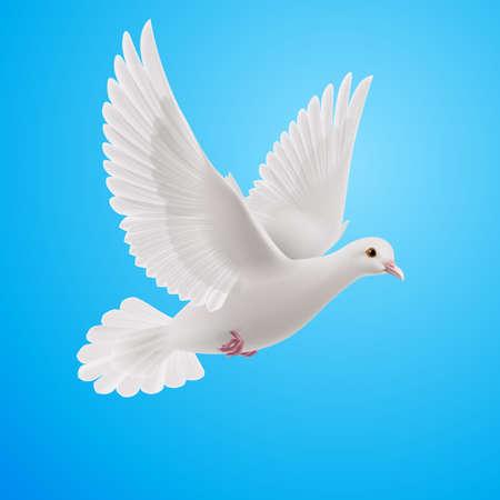 Ilustración de Realistic white dove on blue background. Symbol of peace - Imagen libre de derechos