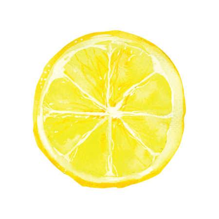 Ilustración de slice of lemon drawing by watercolor, hand drawn vector illustration - Imagen libre de derechos