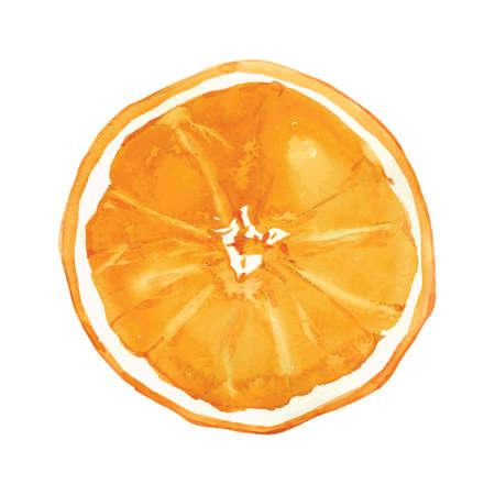 Illustration pour slice of orange drawing by watercolor, hand drawn vector illustration - image libre de droit