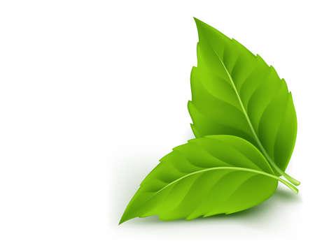 Ilustración de Realistic Eco Friendly Leaves. Vector Illustration - Imagen libre de derechos