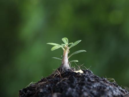 Photo pour new lift growing plant  - image libre de droit