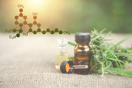 Photo pour Cannabis oil, CBD oil cannabis extract, Medical cannabis concept. - image libre de droit