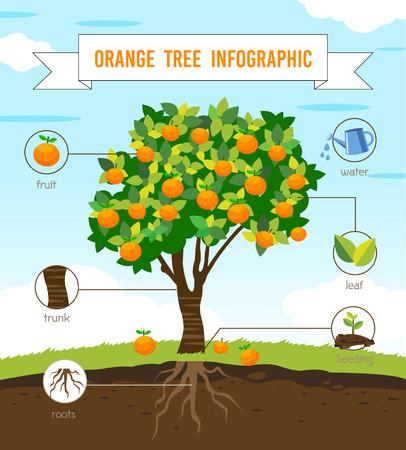 Illustration pour orange tree infographic vector - image libre de droit