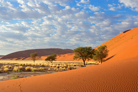 Photo for Sossusvlei landscape with Acacia trees and red sand dunes, Namibia, southern Africa - Royalty Free Image