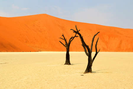 Photo for Death Vlei - Namibia - Royalty Free Image