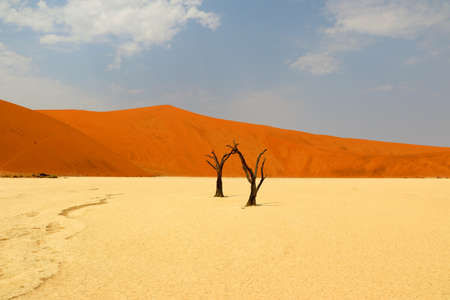 Photo for Death Vlei - Sossusvlei - Namibia Africa - Royalty Free Image