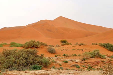 Photo for Big daddy sand dune Sossusvlei - Namibia Africa - Royalty Free Image