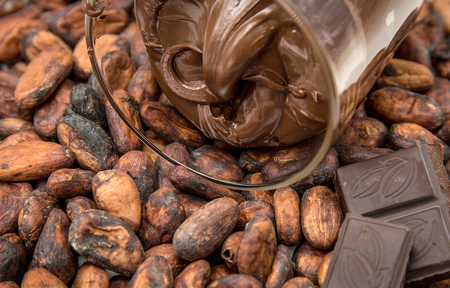Photo for Raw cocoa beans, chocolate paste and pieces of chocolate - Royalty Free Image