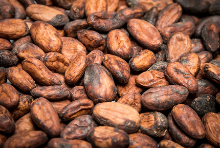 Photo for Raw cocoa (cacao) beans as a background - Royalty Free Image