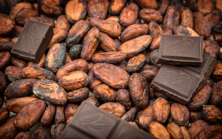 Photo for Raw cocoa beans and pieces of chocolate - Royalty Free Image