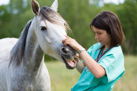 Photo pour Veterinary great performing a scan to a young mare - image libre de droit