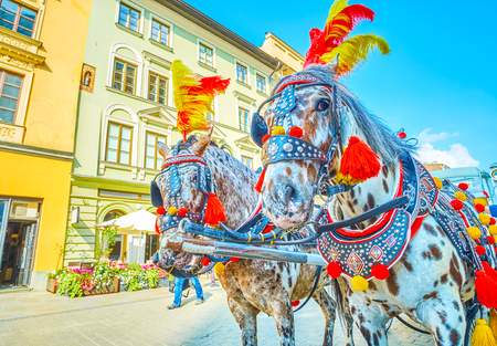 Photo pour The pair of harnessed horses decorated with colorful feathers and pom-poms, Krakow, Poland - image libre de droit