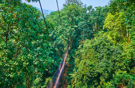 Foto de Aerial view of the deep tropical rainforest and long suspension bridges, stretching along the spreading trees, Tree Top Walk, Mae Fah Luang garden, Doi Tung, Thailand - Imagen libre de derechos