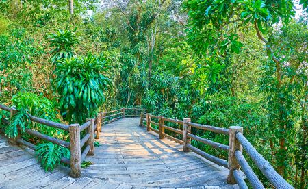 Foto de The curved alley leads to the shady lush rainforest section of Mae Fah Luang garden, Doi Tung, Thailand - Imagen libre de derechos